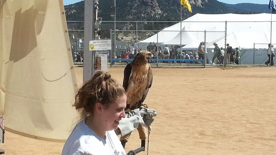 Birds of Prey tent; Scottish Highlands Festival 2013, Estes Park CO